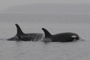 J19, J51 and J41, photo by Dave Ellifrit