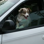 """2008-07-26 Dog in a van at the Durham Farmers Market"" by Ildar Sagdejev (Specious) - Own work. Licensed under GFDL via Wikimedia Commons - https://commons.wikimedia.org/wiki/File:2008-07-26_Dog_in_a_van_at_the_Durham_Farmers_Market.jpg#/media/File:2008-07-26_Dog_in_a_van_at_the_Durham_Farmers_Market.jpg"