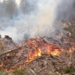 Slash piles that have sat for long periods of time will contain very little moisture in the lower pieces. Once on fire the heat from each piece radiates heat. The amount of water necessary to put this type of fire out would be enormous.