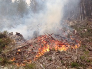 Slash piles that have sat for long periods of time will contain very little moisture in the lower pieces. Once on fire the heat from each piece radiates heat. The amount of water necessary to put this type of fire out would be enormous. Photo from BC Wildfire.