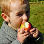 Sooke Community Gardens,, Annual Apple Fest