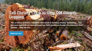 Stop Old Growth Logging website