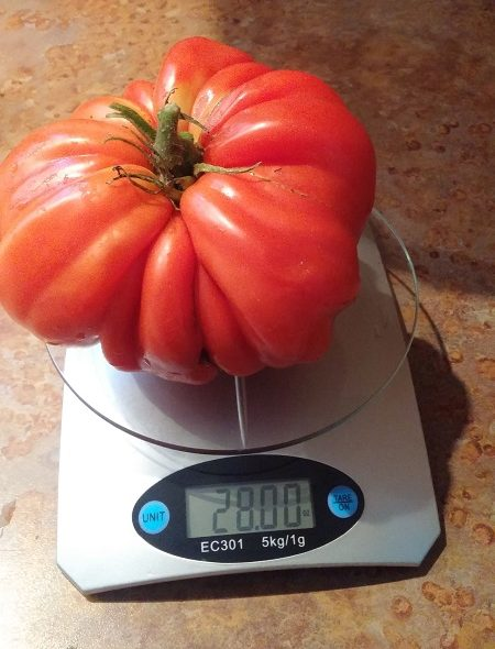 Beat this tomato: The challenge on for the largest tomato, Sooke Fall Fair