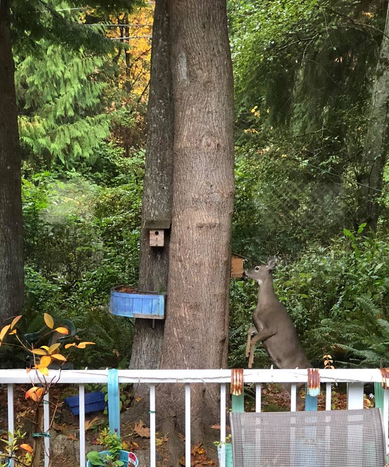 Big Bird at the bird feeder, from Linda VanDewark Stoodley