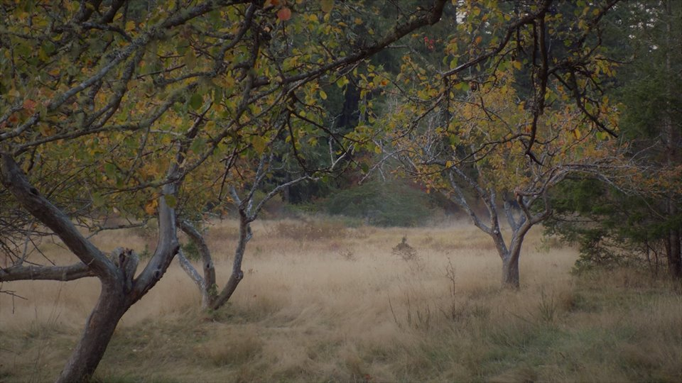 Fog in the orchard, from Caroline Siklenka
