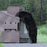 By Yellowstone National Park from Yellowstone NP, USA - Black bear and dumpster, Public Domain, https://commons.wikimedia.org/w/index.php?curid=50245533