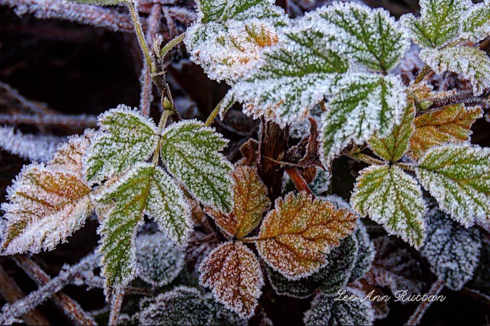 Cold mornings, from Lee-Ann Ruttan