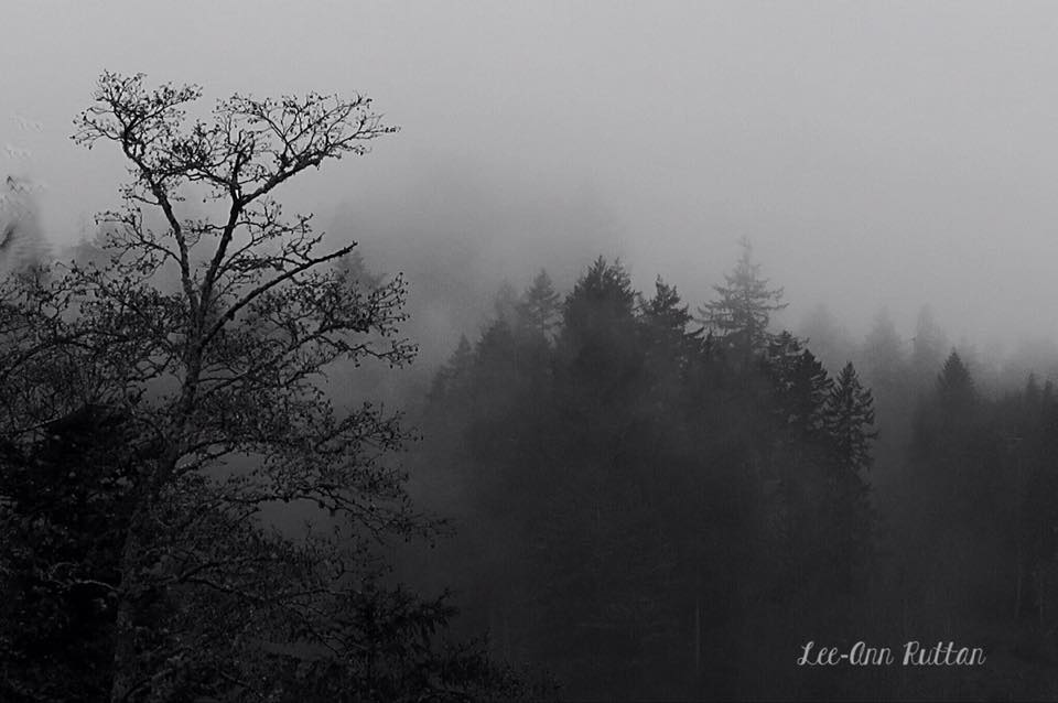 Fog, from Lee-Ann Ruttan
