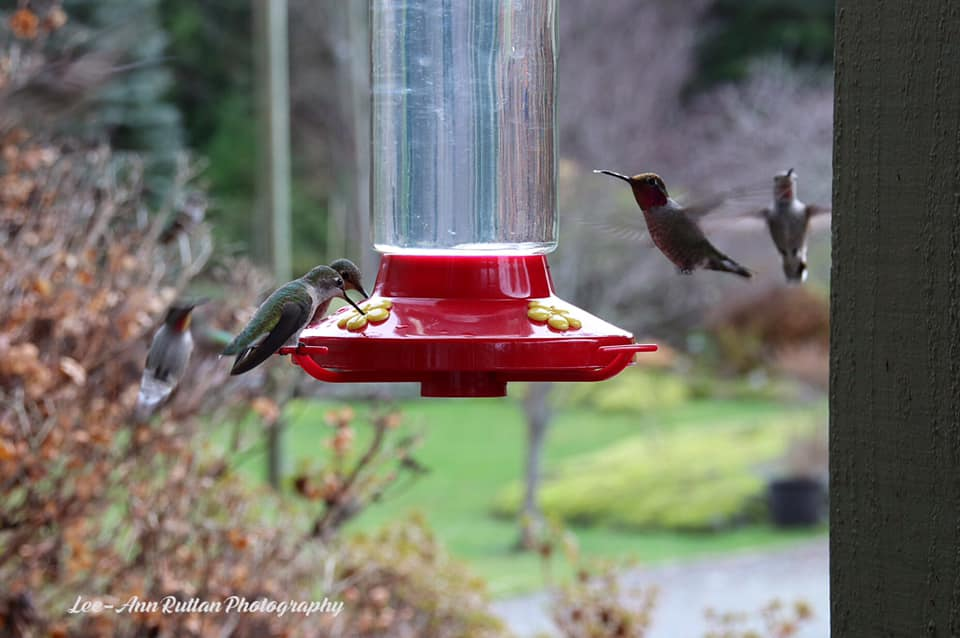 Feeder, from Lee-Ann Ruttan