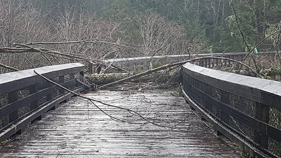 Tree down at Charters Creek Trestle, from Ingrid Wickheim