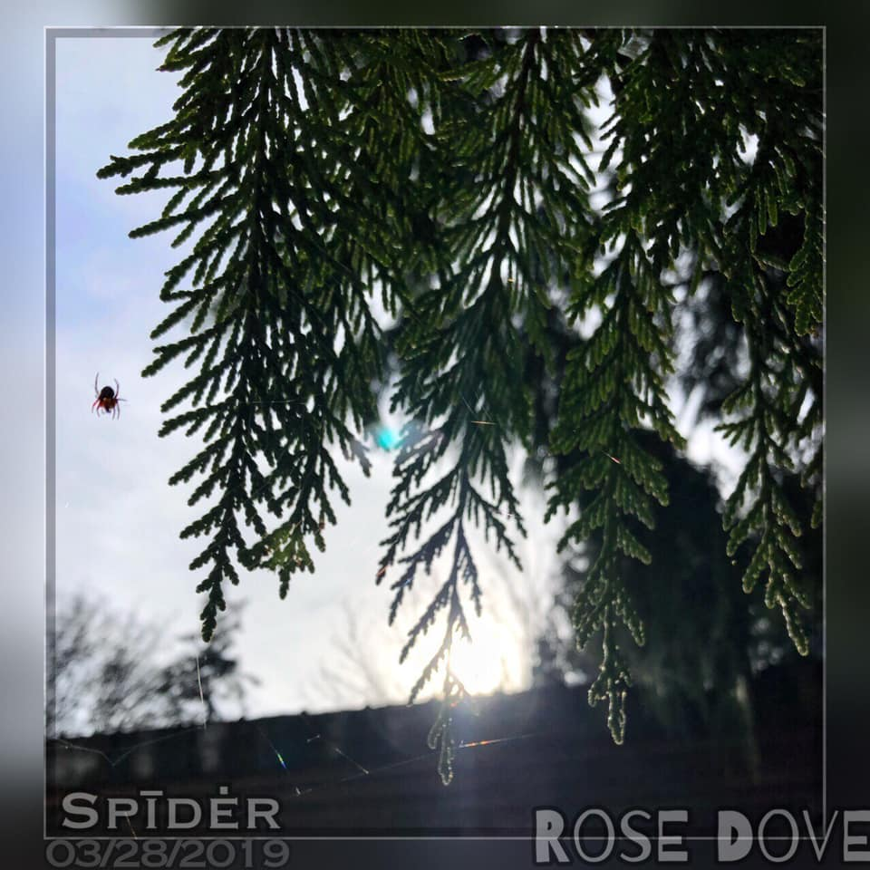 Spider kills the view, from Rose Dove ShAkuru
