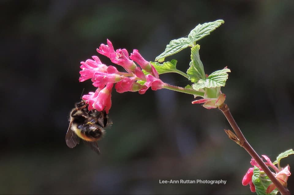 Bee, from Lee-Ann Ruttan