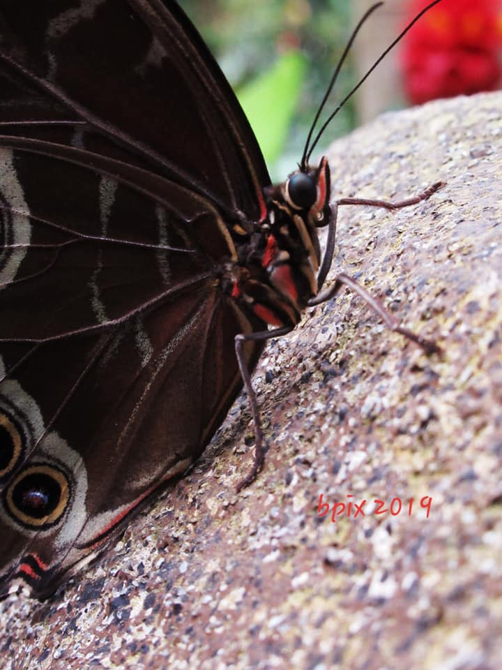Butterfly, close up, from Brenda Gibson