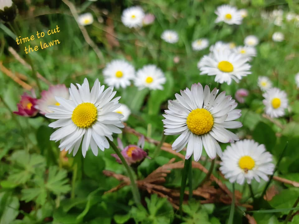Daisies, from Brenda Gibson