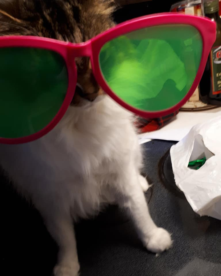 Kitty glasses, from Kirsten Meyer